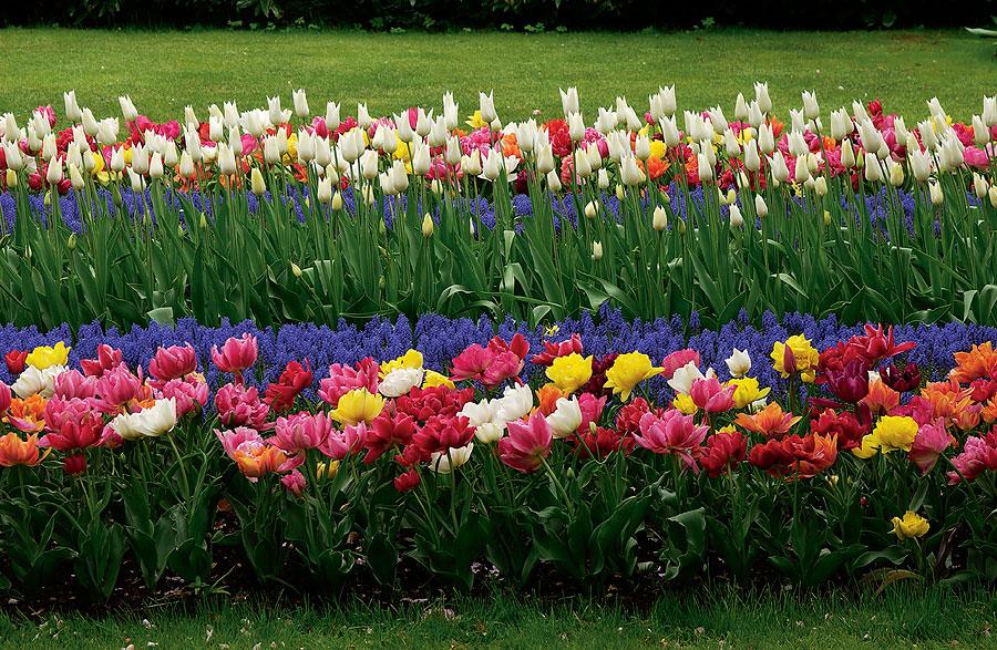 Парк цветов Кёкенхоф, Нидерланды, Европа