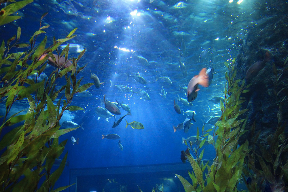 Аквариум подводный мир в паттайе