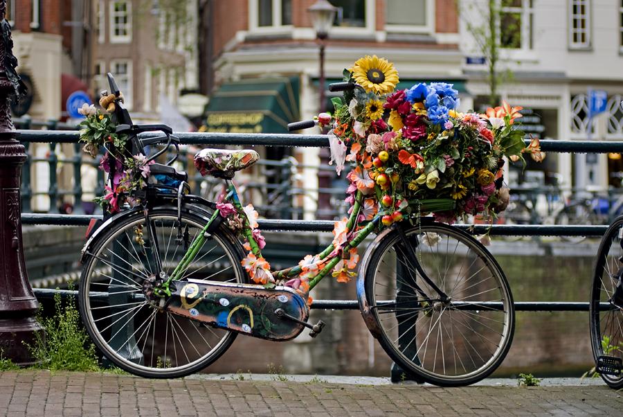 Цветы, Нидерланды