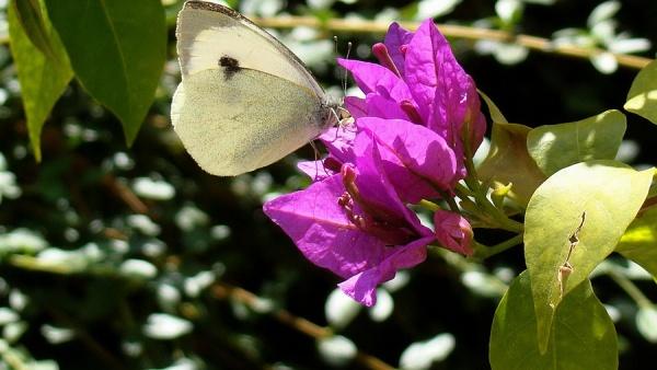 Никитский ботанический сад, Ялта, Крым, Украина, Европа