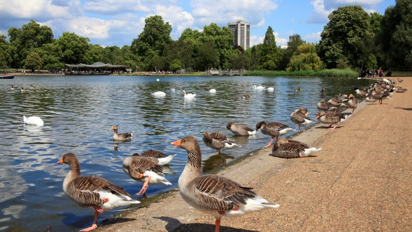 Сент-Джеймсский парк, Лондон, Великобритания, Европа
