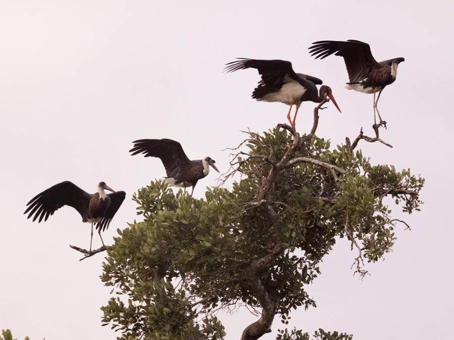 Описание: b Птицы, прилетевшие на зимовку из России в